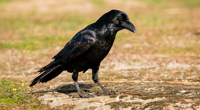 Bird-Borne Diseases
