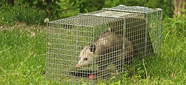 Live Animal Traps